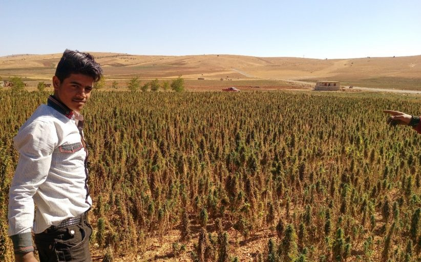 The Role of Cannabis in the Rural Economy of the Bekaa Valley (Lebanon)