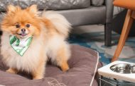 The global pandemic's newest luxury traveler? Your pet